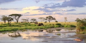 How to Plan Your First Safari in Tanzania's Serengeti National Park
